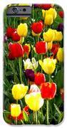 Tulip Garden University Of Pittsburgh  IPhone 6s Case by Thomas R Fletcher