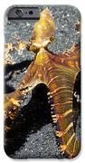 Wonderpus Octopus IPhone Case by Georgette Douwma