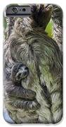 Brown-throated Three-toed Sloth IPhone Case by Suzi Eszterhas