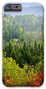 Fall Forest Rain Storm IPhone Case by Elena Elisseeva