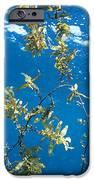 Tropical Seaweed IPhone Case by Alexis Rosenfeld