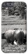 Water Buffalo IPhone Case by Jane Rix