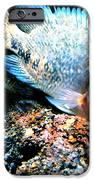 Fish Living In Denmark IPhone Case by Colette V Hera  Guggenheim