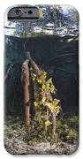 Mangrove Swamp IPhone Case by Georgette Douwma