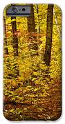 Fall Forest IPhone Case by Elena Elisseeva