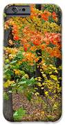 A Blustery Autumn Day IPhone Case by Frozen in Time Fine Art Photography