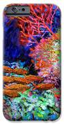 A Flash Of Life And Color IPhone Case by John Lautermilch