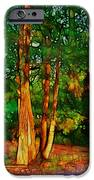 Afternoon Delight IPhone Case by Judi Bagwell