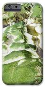 Algae Covered Rocks IPhone Case by Georgette Douwma