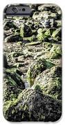 Algae Rocks IPhone 6s Case by Arya Swadharma