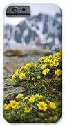 Alpine Meadow  IPhone Case by Elena Elisseeva