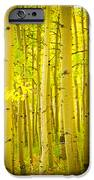 Autumn Aspens Vertical Image  IPhone Case by James BO  Insogna