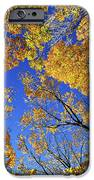 Autumn Treetops IPhone Case by Elena Elisseeva