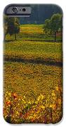 Autumn Vineyards IPhone Case by Garry Gay