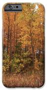 Awesome Aspens IPhone Case by Carol Cavalaris
