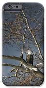 Bald Eagle In A Tree IPhone Case by Con Tanasiuk