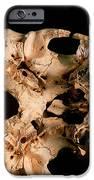 Base Of Skull 5, Sima De Los Huesos IPhone Case by Javier Truebamsf