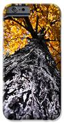 Big Autumn Tree In Fall Park IPhone Case by Elena Elisseeva