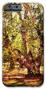 Birch Tree IPhone 6s Case by Jai Johnson
