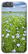 Blooming Flax Field IPhone Case by Elena Elisseeva
