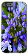 Blue On Blue IPhone Case by Karen Wiles
