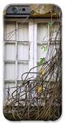Branchy Window IPhone Case by Carlos Caetano