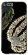Brittle Stars IPhone Case by Lucent Technologies' Bell Labs