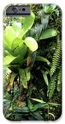 Bromeliad On Tree Trunk El Yunque National Forest IPhone Case by Thomas R Fletcher