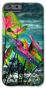 Calladiums IPhone Case by Judi Bagwell