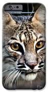 Cat Fever IPhone Case by Kathy  White
