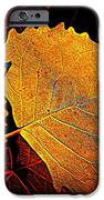 Cottonwood   IPhone Case by Chris Berry