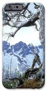 Dead Spruce In Old Forest Fire, Nabob IPhone Case by David Nunuk