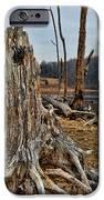 Dead Wood IPhone Case by Paul Ward