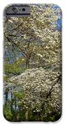 Dogwood Grove IPhone Case by Debra and Dave Vanderlaan