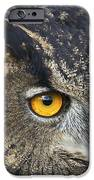Eagle Owl 2 IPhone Case by Clare Bambers