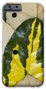 Elaeagnus Pungens 'maculata' Leaves IPhone Case by Dr Keith Wheeler