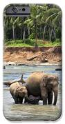 Elephant Family IPhone Case by Jane Rix
