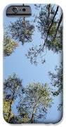 Eucalyptus IPhone Case by Carlos Caetano
