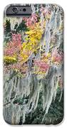 Fall Colors In Spanish Moss IPhone Case by Carolyn Marshall