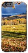 Fall Colours, Cows In Field And Mont IPhone Case by Yves Marcoux