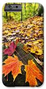 Fall Leaves In Forest IPhone Case by Elena Elisseeva