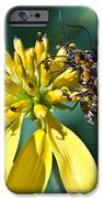 Firefly Fornication IPhone Case by Douglas Barnett
