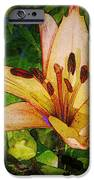 First Asiatic  IPhone Case by Chris Berry