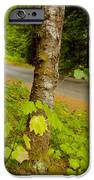 Forest Escape IPhone Case by Idaho Scenic Images Linda Lantzy