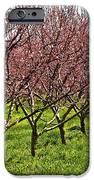 Fruit Orchard IPhone Case by Elena Elisseeva