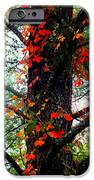 Garland Of Autumn IPhone Case by Karen Wiles