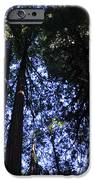 Giant Redwoods IPhone Case by Aidan Moran