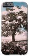 Giant Tree In City IPhone Case by Hag