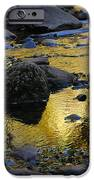 Golden Fall Reflection IPhone Case by Heather Kirk