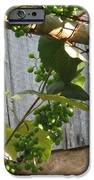 Green Grapes On Rusted Arbor IPhone Case by Deb Martin-Webster